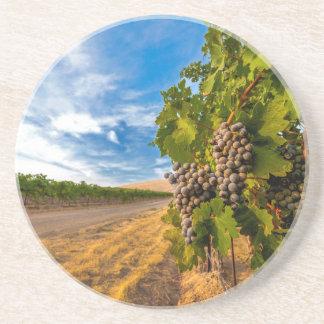 米国、ワシントン州のYakimaの谷。 メルローのブドウ コースター