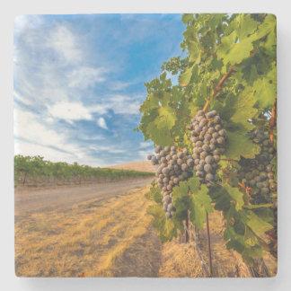 米国、ワシントン州のYakimaの谷。 メルローのブドウ ストーンコースター