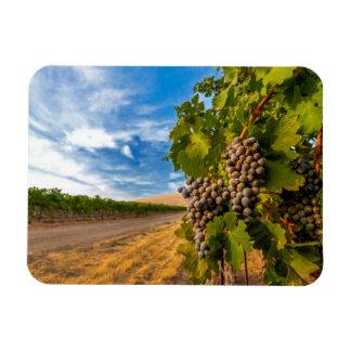 米国、ワシントン州のYakimaの谷。 メルローのブドウ マグネット
