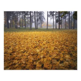 米国、ワシントン州、スポケーンのManito公園、秋 フォトプリント