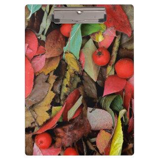 米国、ワシントン州、スポケーンCo.、ホーソーンの葉 クリップボード