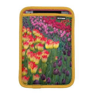 米国、ワシントン州。 咲くチューリップ2 iPad MINIスリーブ