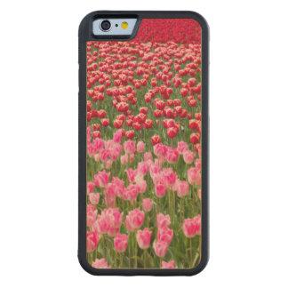 米国、ワシントン州。 多彩のチューリップの分野 CarvedメープルiPhone 6バンパーケース