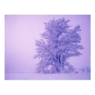 米国、ワシントン州、曇らされるSpokane郡 ポストカード
