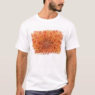 米国、ワシントン州、Bellevue、Bellevue植物の3 Tシャツ