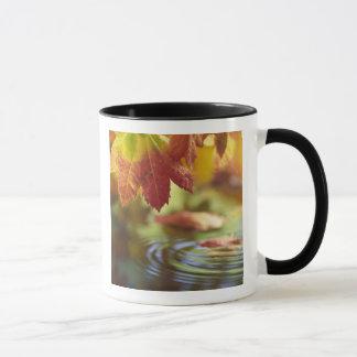 米国、ワシントン州、Bellinghamの秋のクローズアップ マグカップ