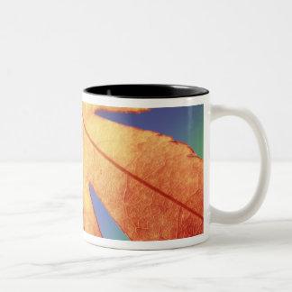 米国、ワシントン州、Bellingham。 信用次のように: スティーブ ツートーンマグカップ