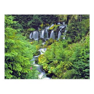 米国、ワシントン州、Mtアダムスの荒野。 双生児 ポストカード