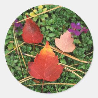 米国、ワシントン州、Spokane郡、ホーソーンの葉3 ラウンドシール
