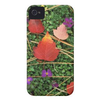 米国、ワシントン州、Spokane郡、ホーソーンの葉3 Case-Mate iPhone 4 ケース