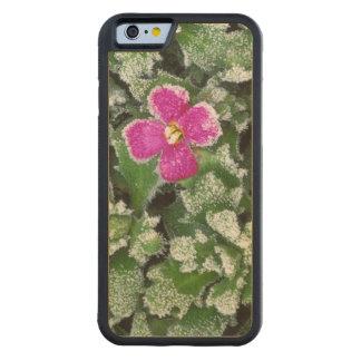 米国、ワシントン州、Spokane郡、Rockress CarvedメープルiPhone 6バンパーケース
