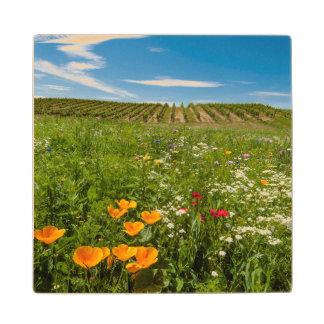 米国、ワシントン州、Walla Walla。 野生の花 ウッドコースター