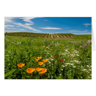 米国、ワシントン州、Walla Walla。 野生の花 カード
