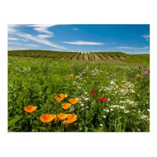 米国、ワシントン州、Walla Walla。 野生の花 ポストカード