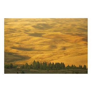 米国、ワシントン州、Whitman郡、Palouseのムギ ウッドウォールアート