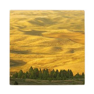 米国、ワシントン州、Whitman郡、Palouseのムギ ウッドコースター
