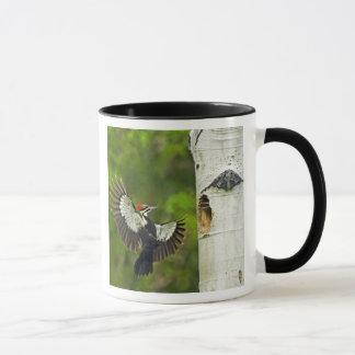 米国、ワシントン州、Yakima。 プリーツをつけられる男性 マグカップ