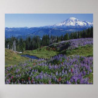 米国、ワシントン州Mt.アダムスの荒野、草原 ポスター