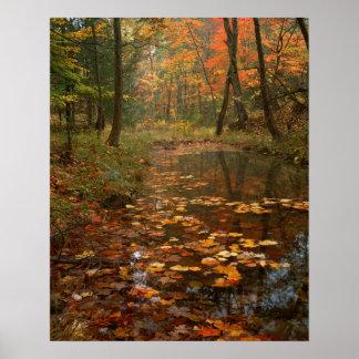 米国、ヴァージニアのDouthatの州立公園の秋 ポスター