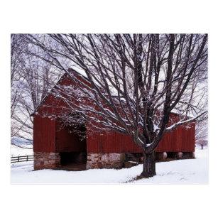 米国、ヴァージニア、Fairfax郡、納屋およびかえで ポストカード