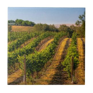 米国、東のワシントン州のWalla Wallaのブドウ園 タイル