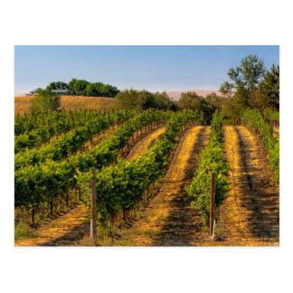 米国、東のワシントン州のWalla Wallaのブドウ園 ポストカード