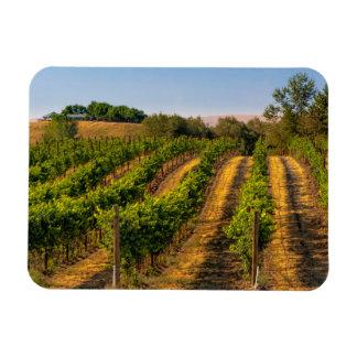 米国、東のワシントン州のWalla Wallaのブドウ園 マグネット