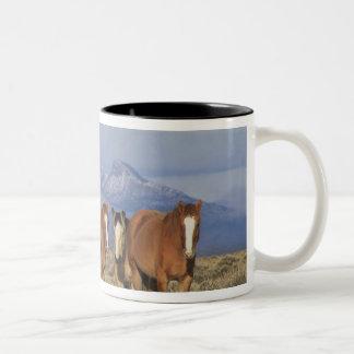 米国、馬のCodyのグループの近くのワイオミング、ハート ツートーンマグカップ