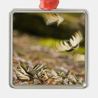 米国、TN、Tellico。 アゲハチョウの蝶 メタルオーナメント
