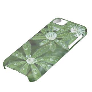 米国、WA、オリンピックNPのLupineの雨滴 iPhone5Cケース
