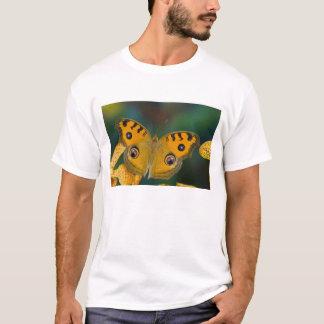 米国、WA、Sammamish、熱帯Butterfy Tシャツ