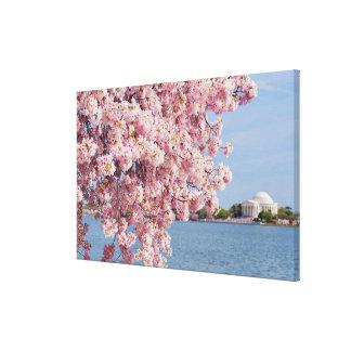 米国、Washington D.C.の桜 キャンバスプリント