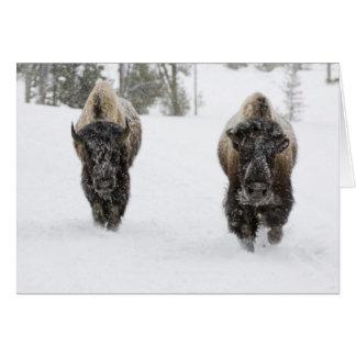 米国、WY、イエローストーンNPのアメリカ野牛(バイソン カード