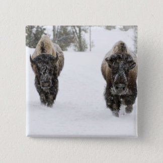 米国、WY、イエローストーンNPのアメリカ野牛(バイソン 5.1CM 正方形バッジ