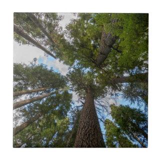 米松の木おおい タイル