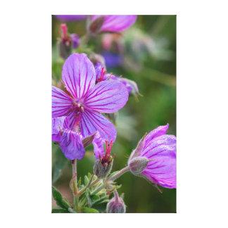 粘着性があるゼラニウムの野生の花 キャンバスプリント