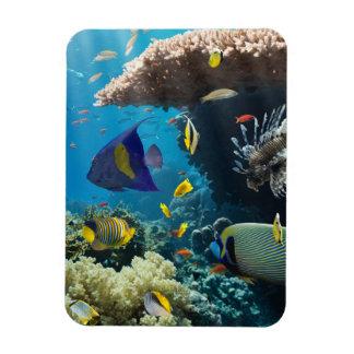 紅海、エジプトの珊瑚そして魚 マグネット