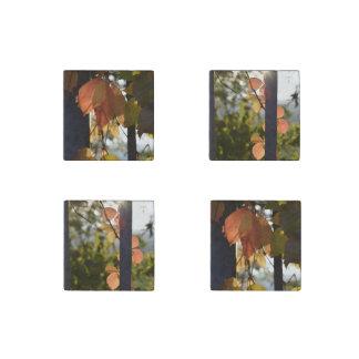 紅葉のコレクション ストーンマグネット
