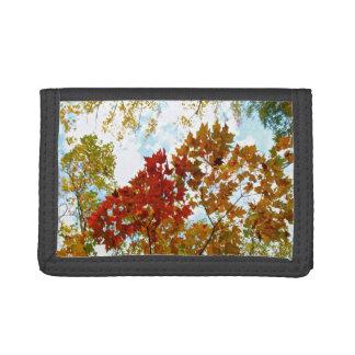 紅葉の写真の秋の木の葉の空の眺め