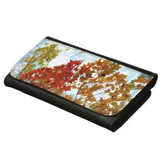 紅葉の写真の秋の木の葉