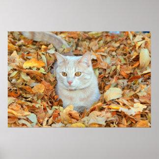 紅葉ポスターの若い猫 ポスター