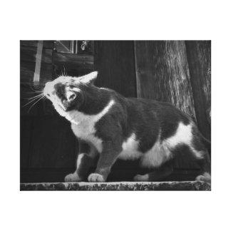 納屋の子猫の白黒キャンバス キャンバスプリント