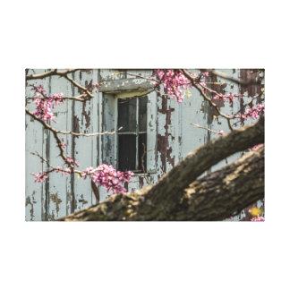 納屋の窓を組み立てる赤い芽 キャンバスプリント