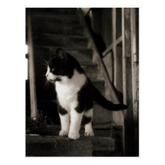納屋猫の野生のネコ科の農場の子猫猫 ポストカード