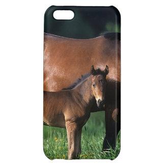 純血種のロバ及び子馬1 iPhone5Cカバー