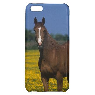 純血種の馬のグループ iPhone5C