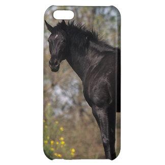 純血種の馬の地位 iPhone5C