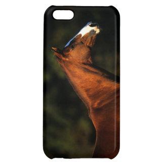 純血種の馬のHeadshot iPhone5Cカバー