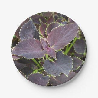 紙皿-メルローのコリウス ペーパープレート