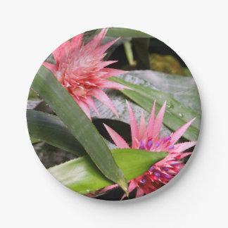 紙皿- Miltassiaの蘭 ペーパープレート